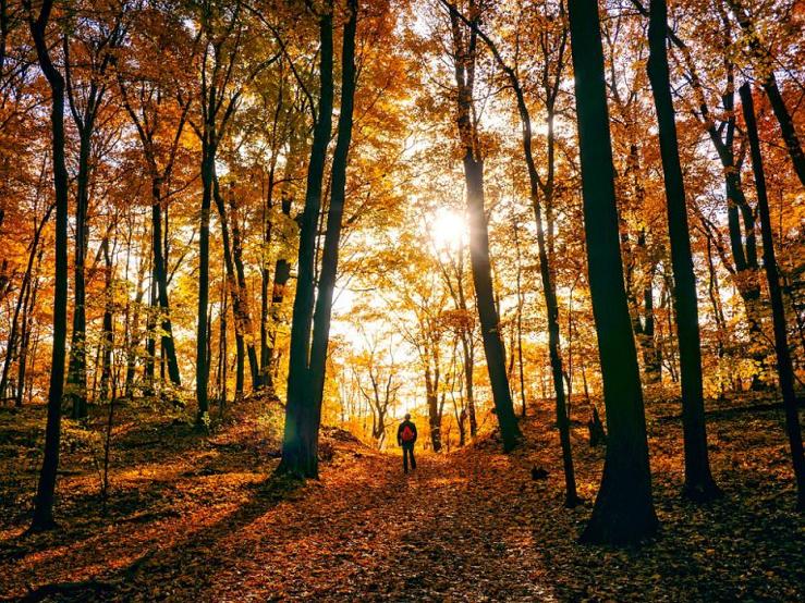 Itt van az ősz, itt van újra – az évszakváltás hatásai